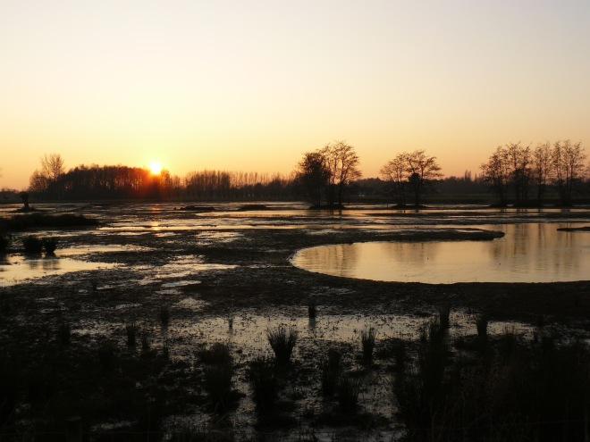 Natuurgebied 'Westerplas', parel van Hoog Latem