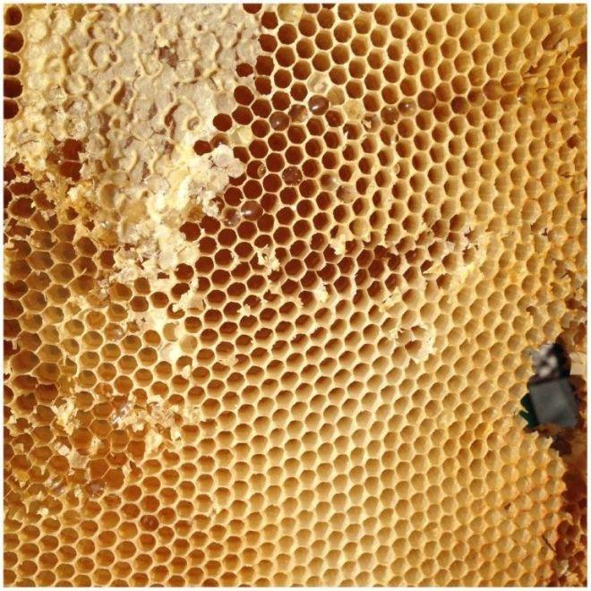 Honigraat - foto E. Czerniewski