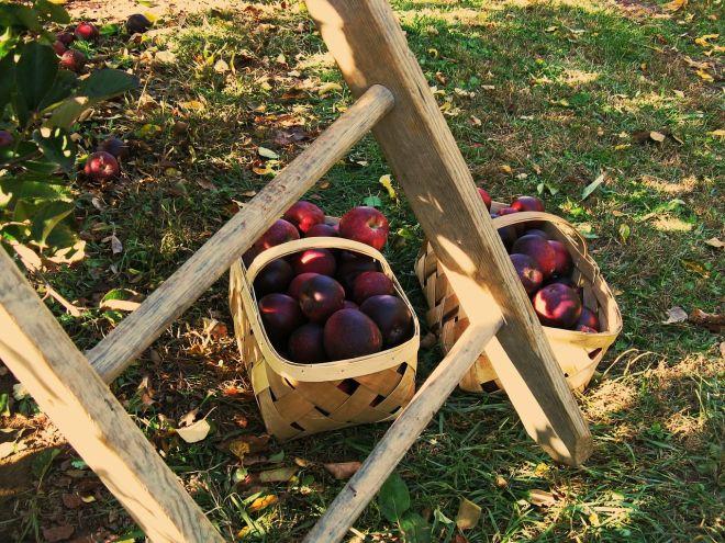 apples-399870_1280 (002)